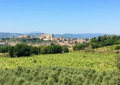 Wijn wandelen Orvieto